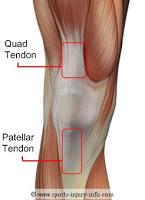 patellar+tendon